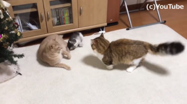 「ケンカしちゃダメ!」一触即発なネコの仲裁に入る子猫