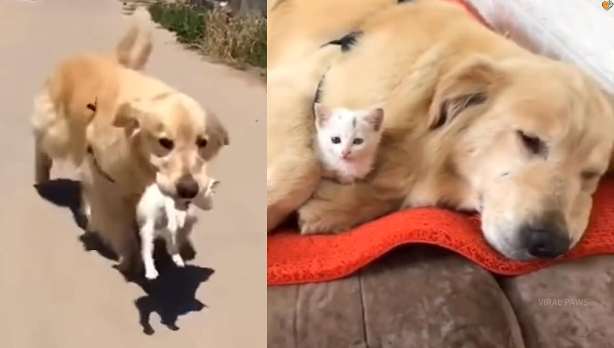 育てる 犬 の を ライオン が 赤ちゃん