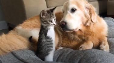 前脚を失った保護猫が里親宅で元気に駆け回り、犬と仲良く暮らす生き生きとした姿にほっこり